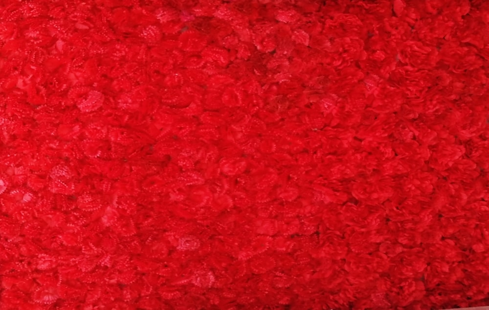 red flower texture dark red background photo images free download