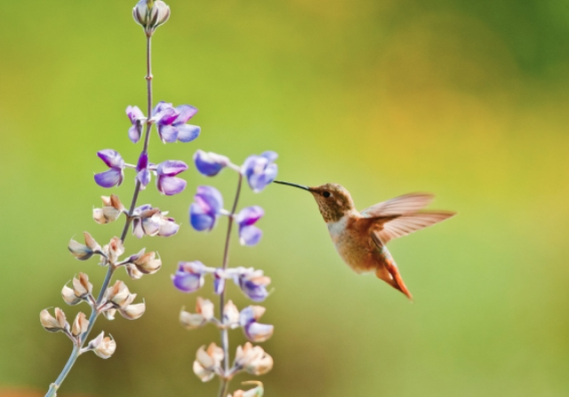 Pictures Of Flowers Hummingbirds Like