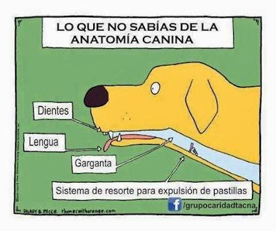 Resultado de imagen de chistes perros veterinario