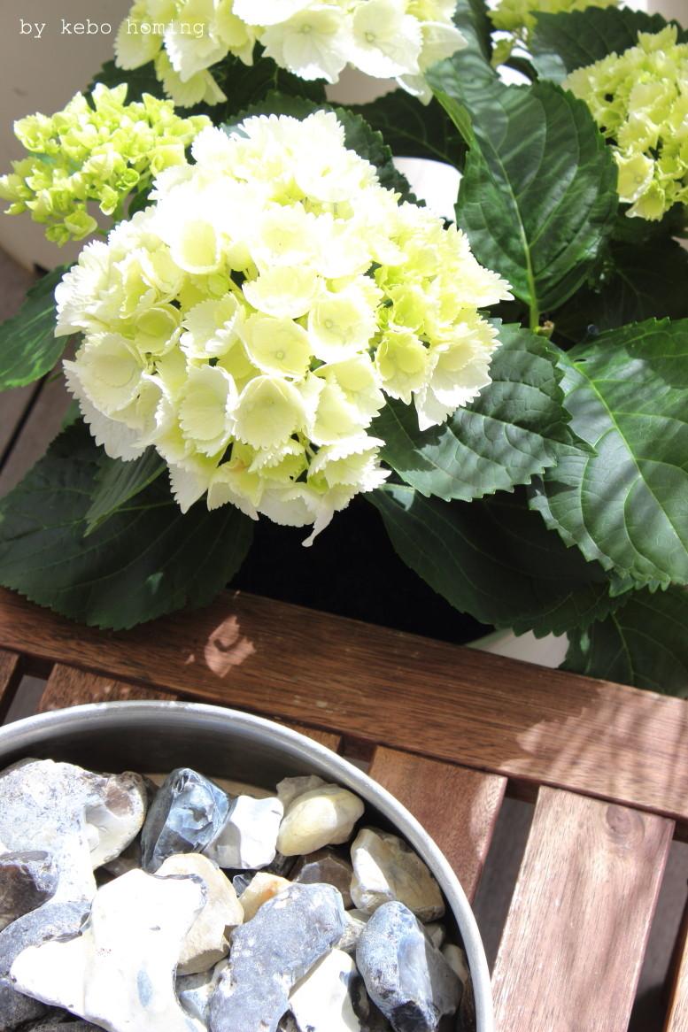 Ein klar strukturierter minimalistischer Garten, verschiedene Gräser, Hortensie, Schneeball, Grüntöne, lineare Beete, clean, minimal styled garden, spring time in the garden, Frühling im Garten, by kebo homing, Südtiroler Food- und Lifestyleblog