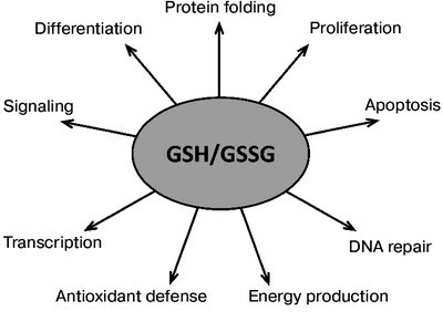 Antioxidant Functions of glutathione
