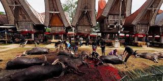 Ini Alasan Mengapa Orang Toraja Yang Meninggal Harus Dipotongkan Hewan