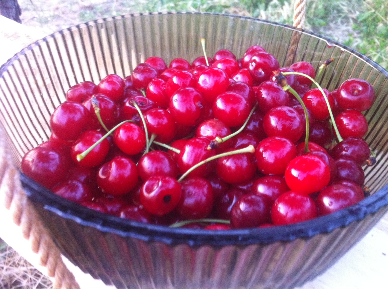 HAVE YOUR OWN FRESH CHERRIES!
