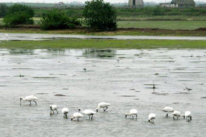 Khám phá vùng lõi khu dự trữ sinh quyển thế giới ở cửa sông Hồng -5