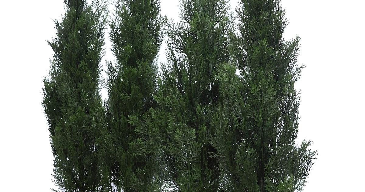 Jardineras seto planta artificial exterior - Plantas jardineras exterior ...