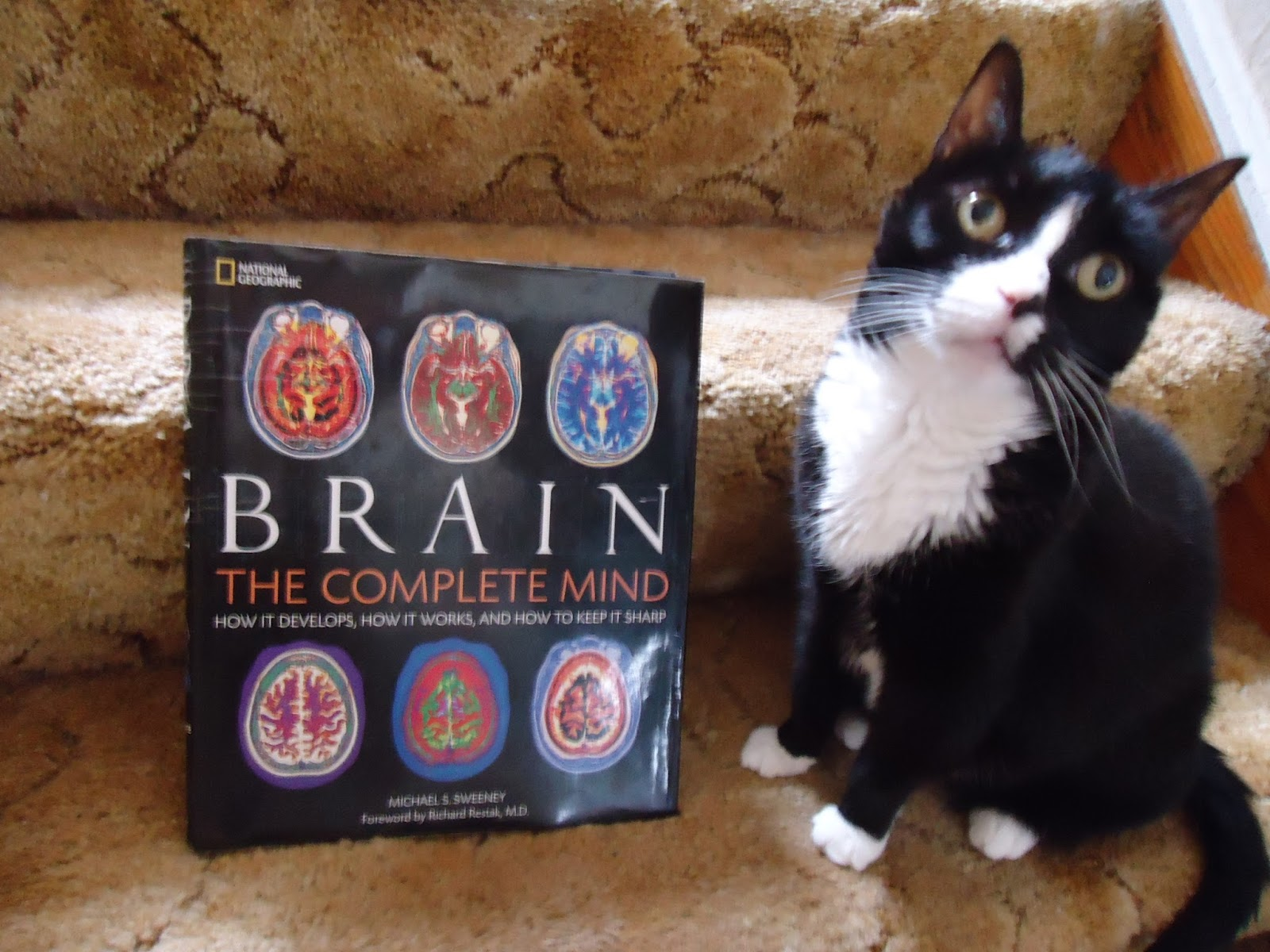 BRAIN THE COMPLETE MIND PDF DOWNLOAD