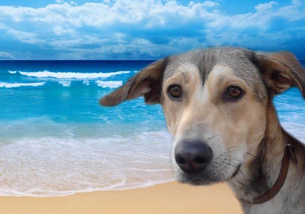Τελικά επιτρέπονται τα σκυλιά στη θάλασσα;
