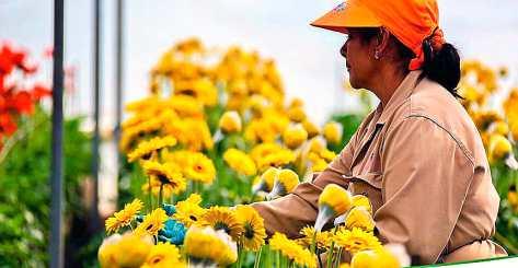 como hacer un cultivo de flores en casa consejos y tips
