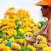 7 formas de cultivar flores en Casa