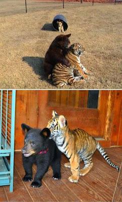 animales divirtiendose