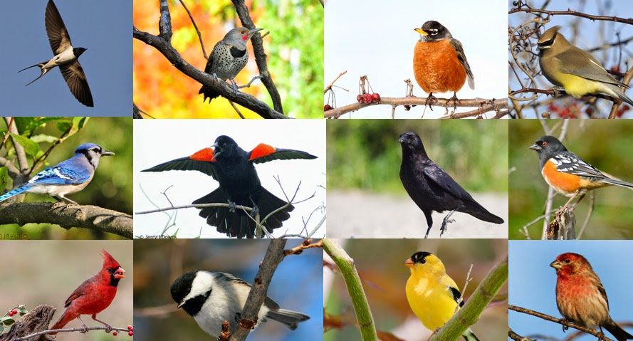 Quiz Can You Name These 20 Common North American Backyard Birds Kuriositas