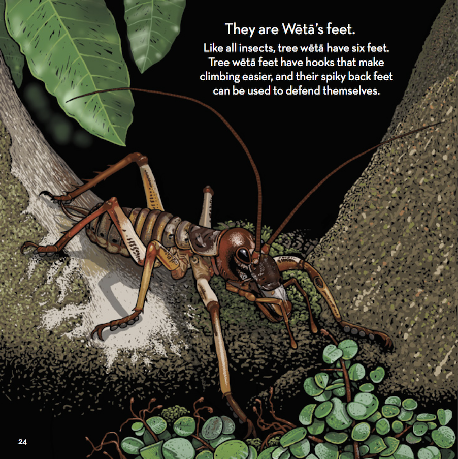 How to Make a Weta Home in Your Garden recommend