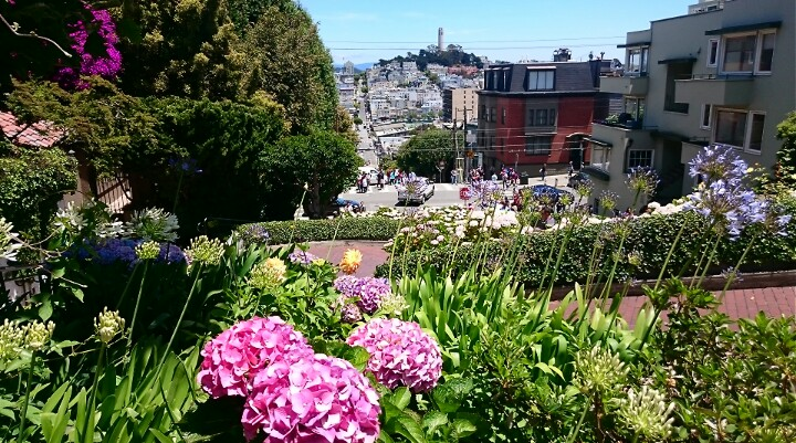 flowers at the top of Lombard Street
