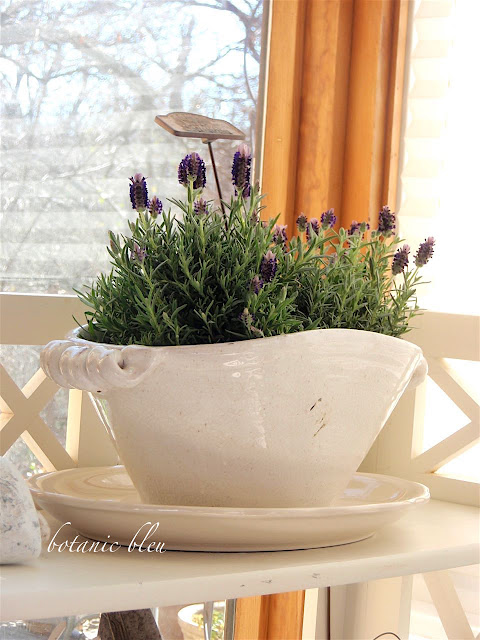 A Fast Inexpensive Spring Touch on outside bringing plants inside winter