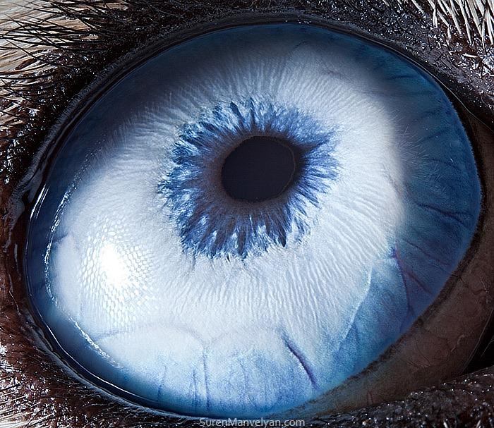 Amazing Close Up Photos Of Animal Eyes 9 Pics Amazing