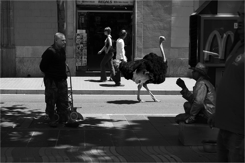 09-Ostrich-Ceslovas-Cesnakevicius-The-Zoo-on-our-Streets-Black-and-White-Photography-www-designstack-co