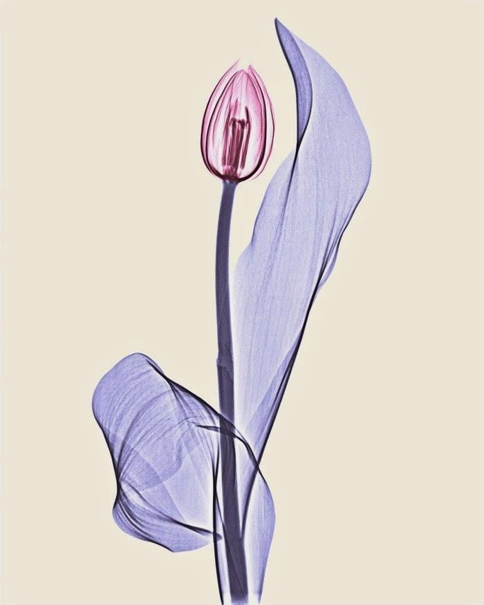 Необычные фото цветов от Брендана Фицпатрика
