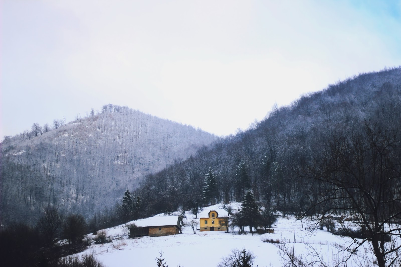 filipa canic blog, youarethepoet, you are the poet blog, winter, forest, house on the hill,