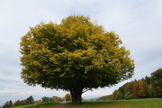 A-Z Bäume, Ideen mit Bäumen, Seniorenarbeit, Aktivierungen, IDeen, Demenz