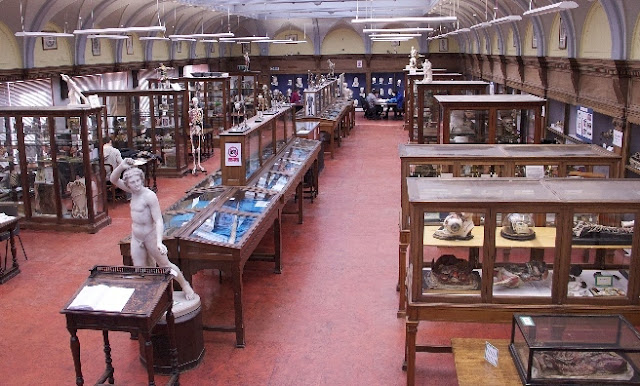 Edinburgh University Anatomical Museum