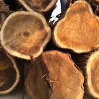 gỗ tròn cây Tràm