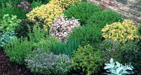 La campagna appena ieri le virt delle erbe for Piante di giardino