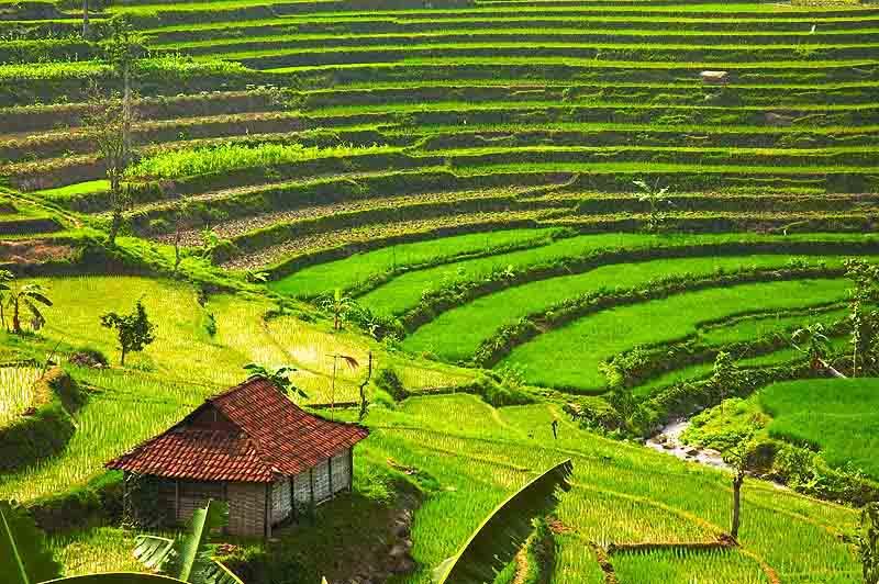 Gambar Pemandangan Sawah Dan Pegunungan Terindah Freewaremini