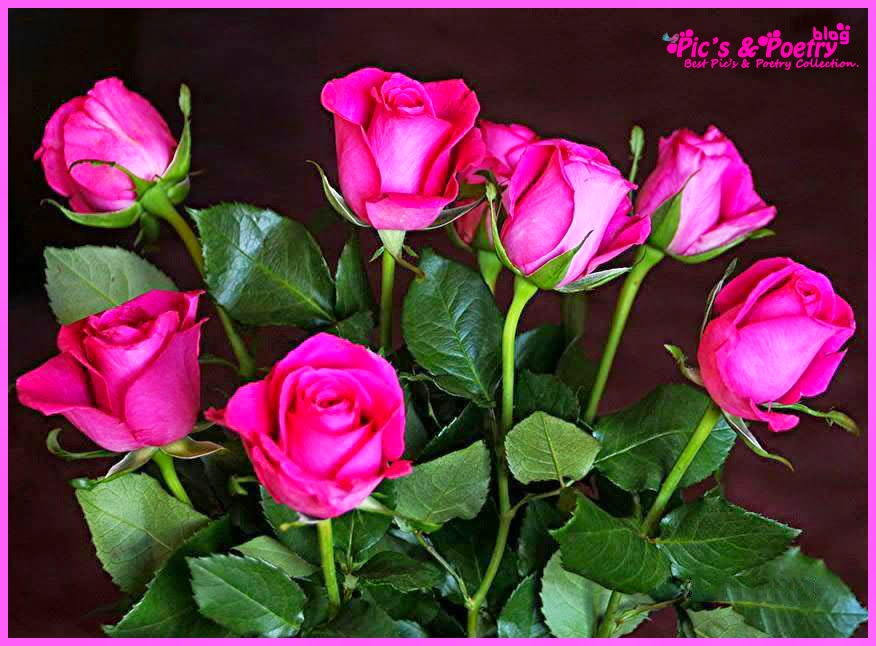 Beautiful Roses Pics With Quotes