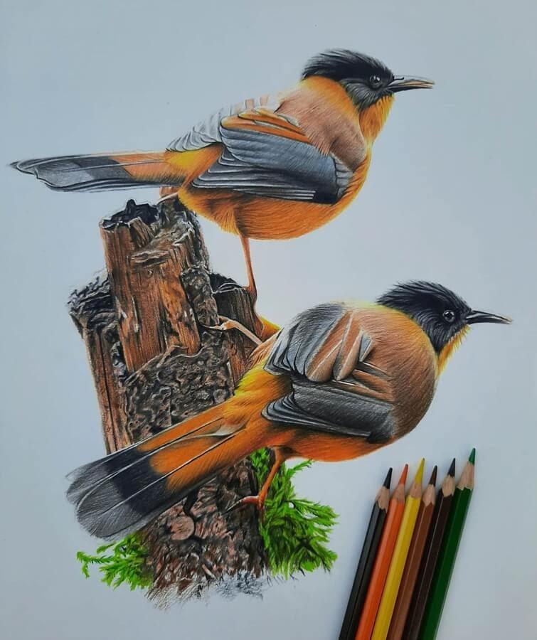 11-Bele-Birds-Drawings-www-designstack-co
