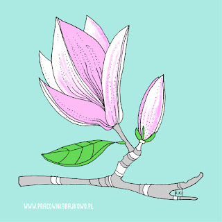 221* Magnolia *Magnolia liliflora*