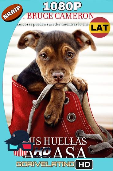 Mis Huellas a Casa (2019) BRRip 1080p Latino-Ingles MKV