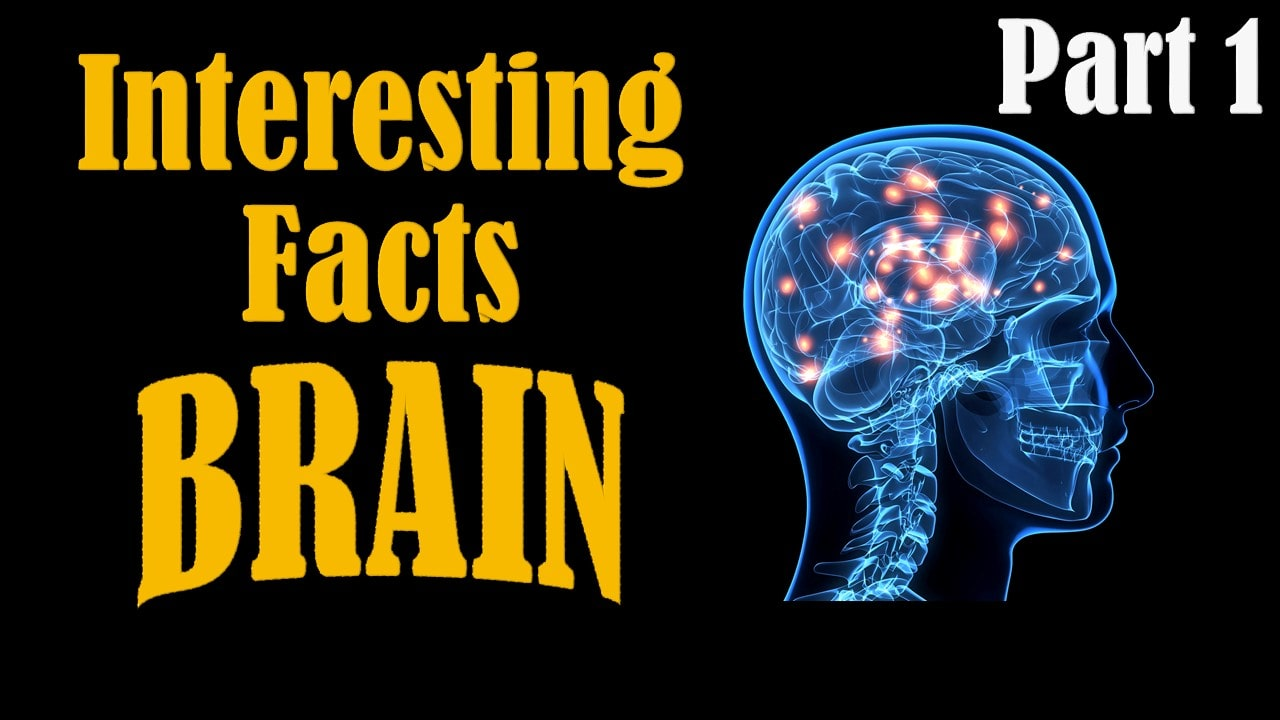 [VIDEO] Interesting Facts About Brain || Part 1