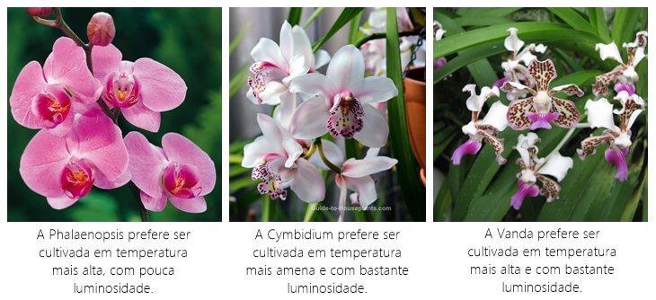Phalaenopsis-Cymbidium-Vanda