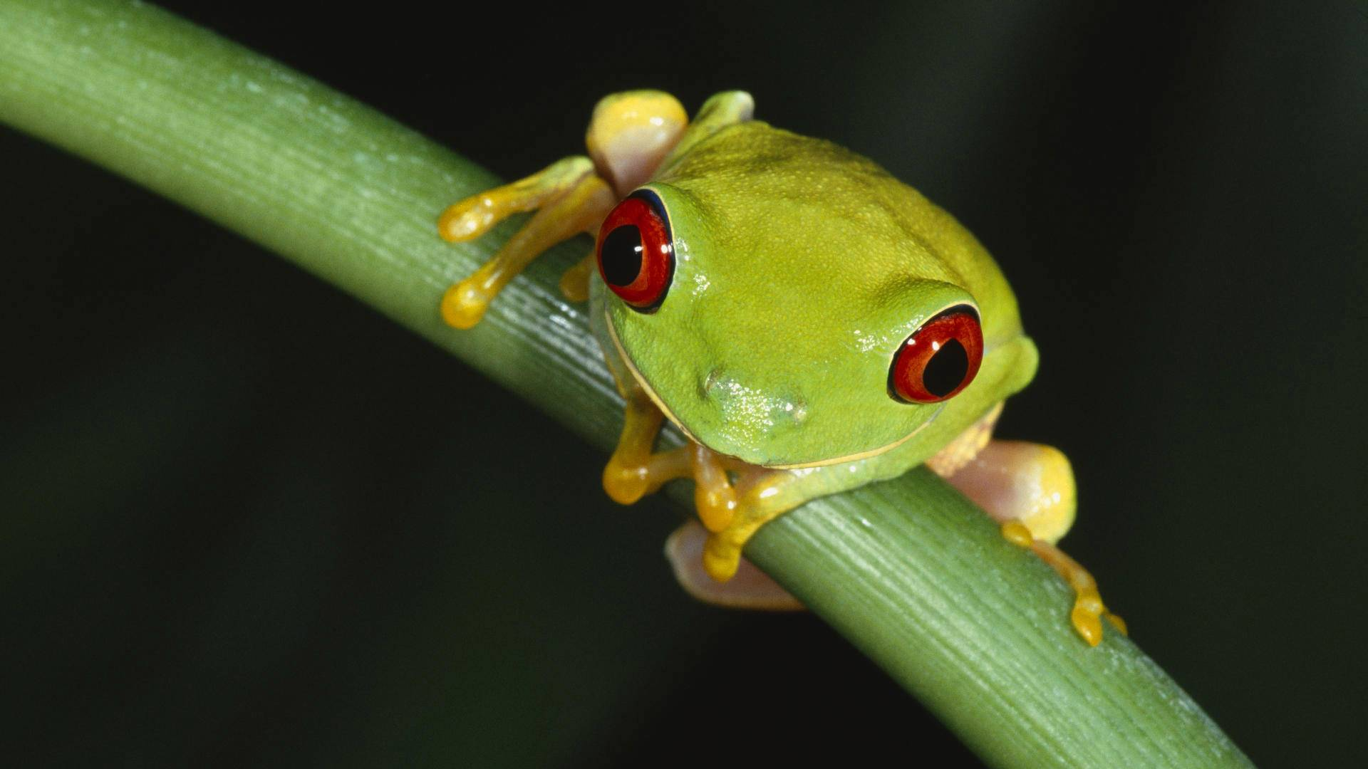 Frog HD Wallpapers