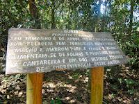 Parque Estadual da Cantareira em São Paulo