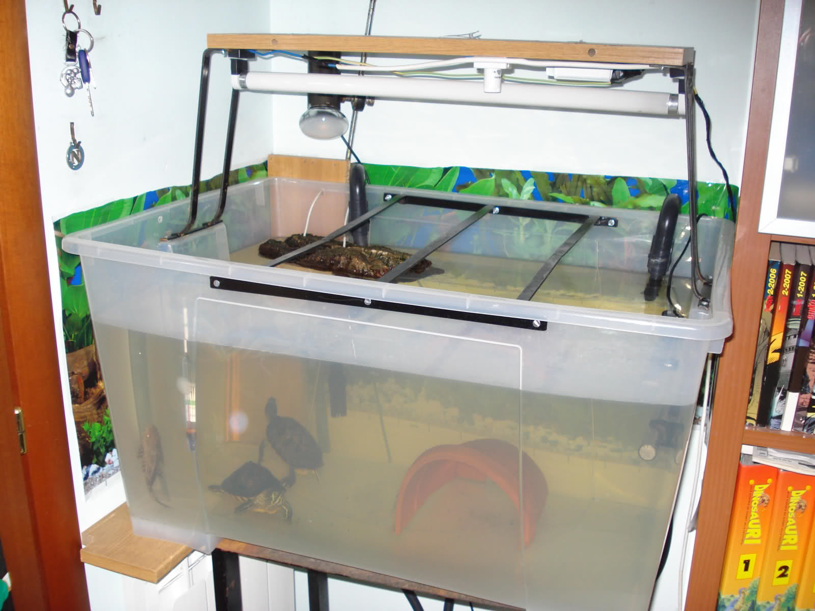 Io tartaruga trachemys home sweet home for Vasca esterna per tartarughe