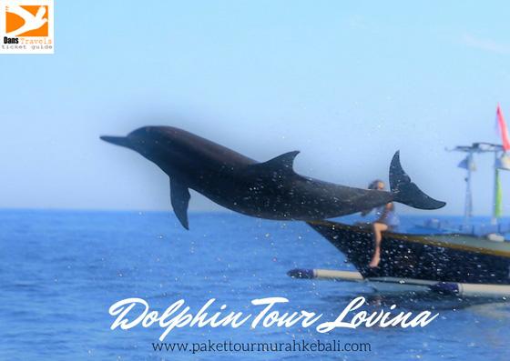 3 Pilihan Favorite Tour Dolphin Lovina Bali Utara Paket
