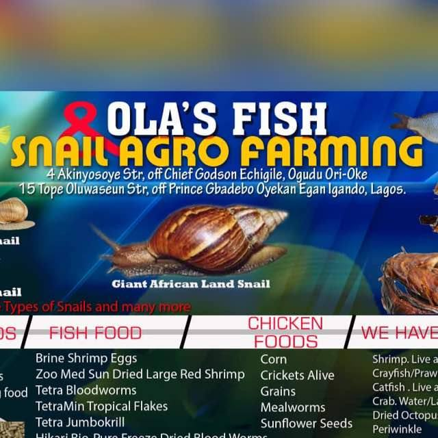 Ola fish Snail Farming