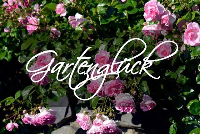 Rose, Jasmina, Gartenglück