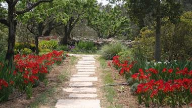 Jardín de lirios y rosas en Benissa, Alicante.