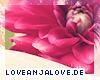 http://loveanjalove.de