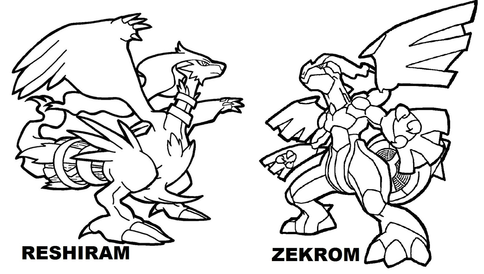 Lovely Zekrom Vs Reshiram Legendary Pokemon Coloring Pages Amazing Pictures