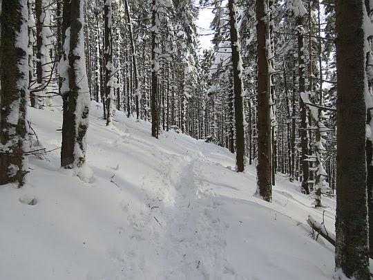 Las na Złotej Grapie.