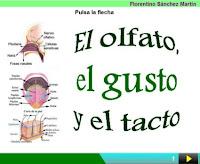 http://cplosangeles.juntaextremadura.net/web/edilim/curso_3/cmedio/los_sentidos_3/el_olfato/el_olfato.html