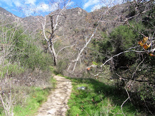 View north on Bailey Canyon Trail, Sierra Madre