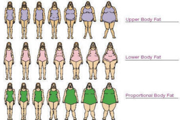 Now Let Us Also Have A Look At General Body Fat Distribution Chart