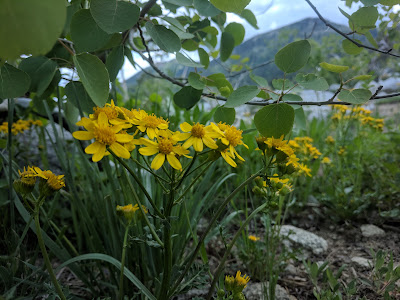These yellow flowers on the side of the Trail is just one of the many variety of flowers you will see along the trail.