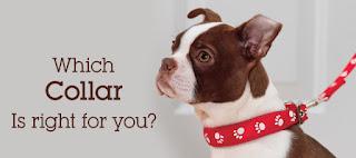 ¿Por qué elegir los collares y correas adecuados para perros?