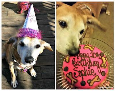birthday dog senior rescue adopt hound cake hat