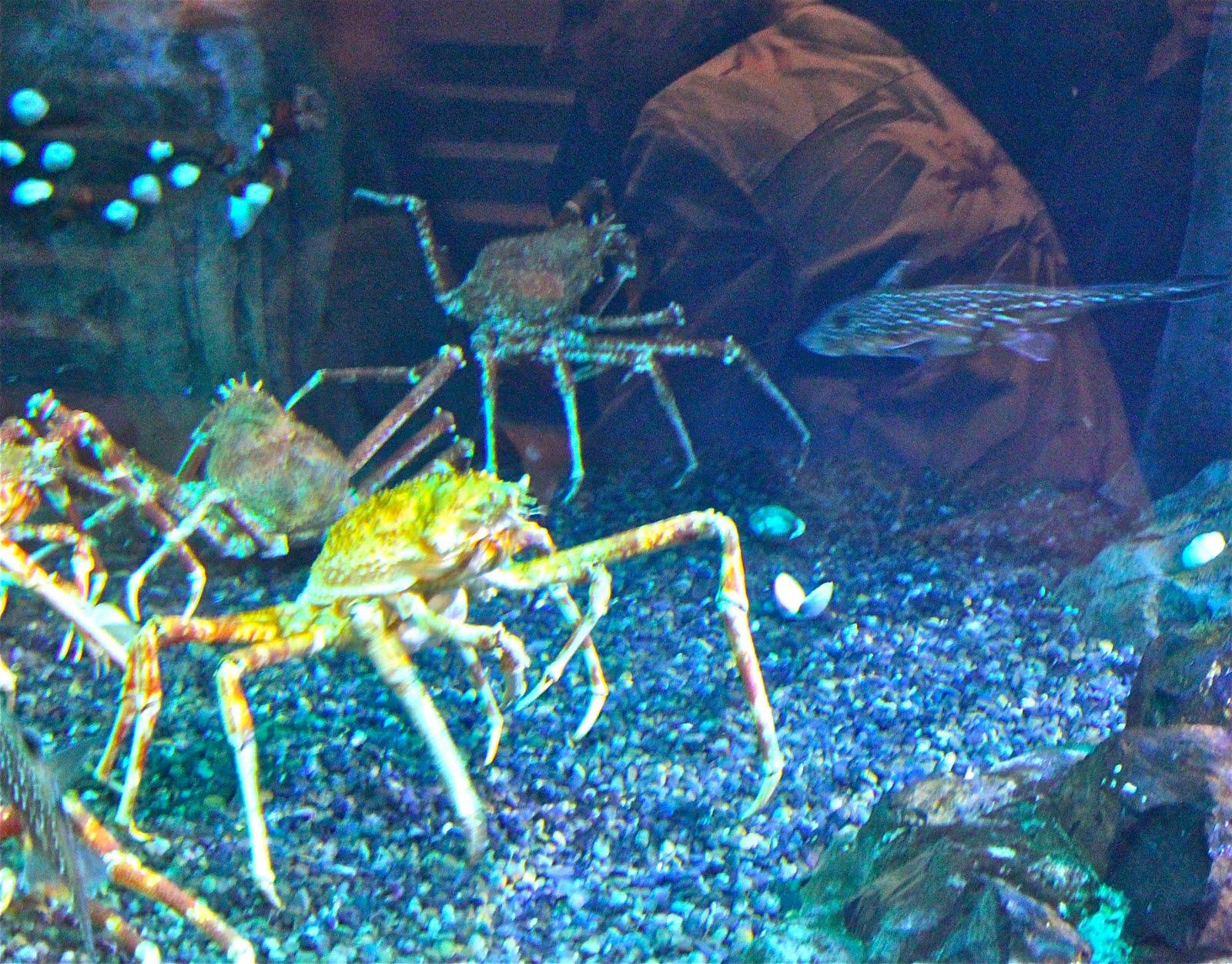 Pet Supplies Aquarium Airline Tubing For Air Stones 100 Meters Bulk Buy Alt-100 Pretty And Colorful
